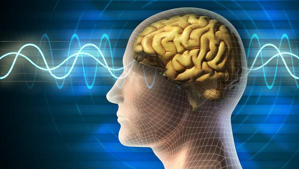 Форматы мозга, нейроны сердца