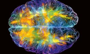 08 и 09.02 Форматы стресса в структурах мозга
