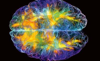 05-06.06.  «Форматы стресса в структурах мозга, нейронах сердца и пищеварительной системы». Онлайн/офлайн.*