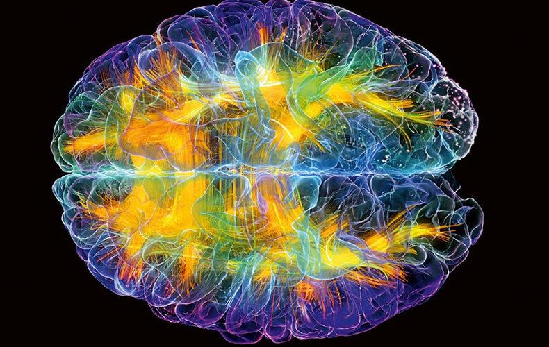 01 и 02.06 Форматы стресса в структурах мозга